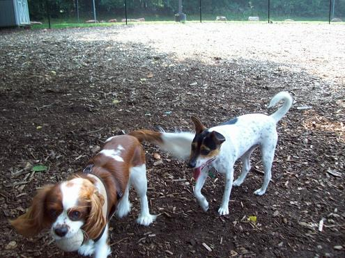 Camera Critters – Just Another Day At The Dog Park