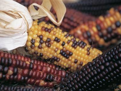 The Thursday 13 – Corn Harvest Art and Crafts