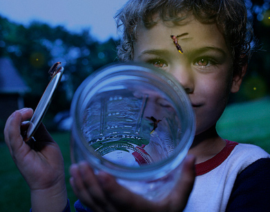 F is for…. Fireflies (and lightning bugs too!)