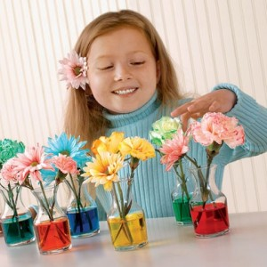 spring-bouquet-flower-spring-craft-photo-420-FF0307EFAA01