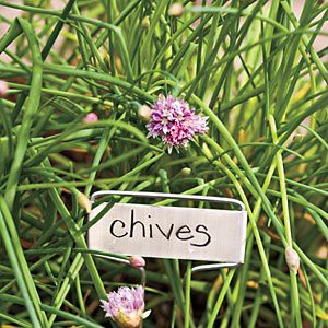 chives-m