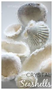 Crystal-seashells-science-ocean-beach-activity-611x1024