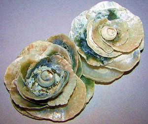 seashell_rose_s1 (1)